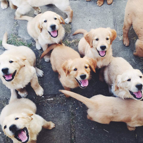 Image result for Woof Woof Puppies