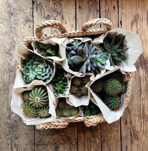 cacti, cactus, home decor, plant, room decor - image #4284532 by ...