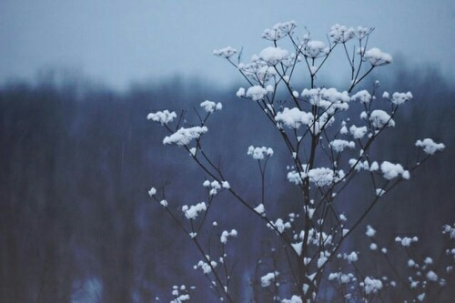 Aesthetic Flowers Grunge Hipster Photography Image